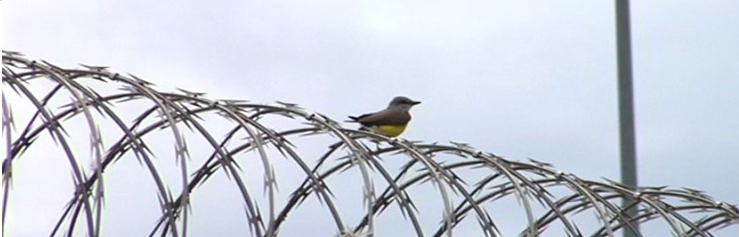 bird-on-the-wire