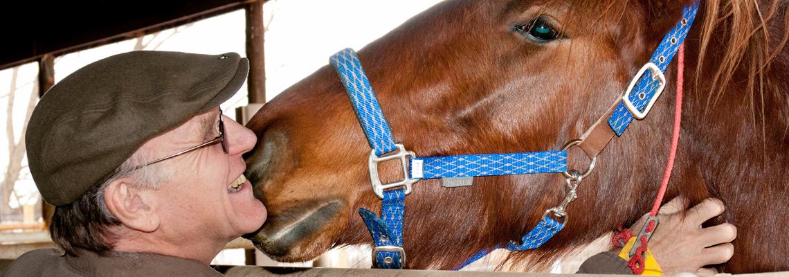 slide vpom fv horse